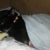 6月14日(火)梅子、お熱出た、風邪ひいたかも