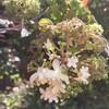返り咲きの花