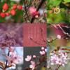 アメブロ、Instagram、Facebookに作家「葉山 葵」さんの詩をご紹介しました。(先週の作品「白梅」と共に。)