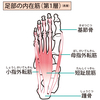 お尻を有効に鍛えるには小趾が重要です!小趾(指)外転筋の特徴とバランスへの影響