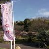 2019年2月下旬。荒山公園(こうぜんこうえん)梅林の開花状況はわりと見頃でした【大阪府堺市南区】