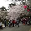 浜松城公園桜の開花とアース・エコ・フェア