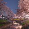 大和高田の夜桜
