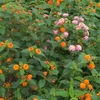 ⑬雨の中で生き生きとした花たち
