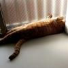 猫さんが好きな場所