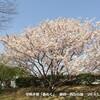 「春めく」季節の花ウォッチング