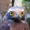 スリランカ旅行3日目・ウィルパットゥ国立公園
