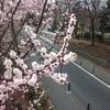日本一時帰国と東京観光