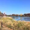 秋の浮間公園