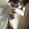 【愛猫日記】毎日アンヌさん#68