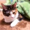 【愛猫日記】毎日アンヌさん#118