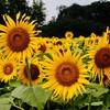 テーマは「花」〜8月23日(月)『ゆったり清瀬』
