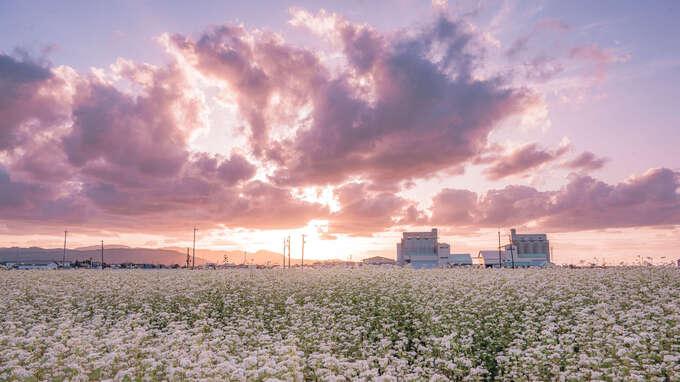 日本の四季を届けるフォトレター - 秋の「季語」に想いを馳せて by Akine Coco