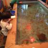【スーパーフィッシング豊島園】4歳児も釣れた!豊島園にある室内釣堀で金魚釣♬