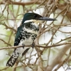 ベリーズ クルックドツリー野生生物保護区の野鳥たち