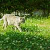 光の中を歩く猫