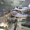 恐竜いっぱい!上野【国立科学博物館】で46億年の生命の不思議を5歳児と考える