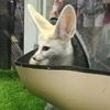 """【バンコク・イベント】動物と触れ合えるタイのペットイベント""""Pet Expo Thailand(ペットエキスポ タイランド)"""""""