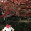 Fall Colors in Arashiyama, Kyoto