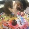 【猫おもちゃ購入レビュー】「キャッチミーイフユーキャン2」を自分で操作する猫にびっくり!