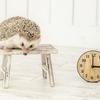 ブログ記事を作成する時間を短縮させる方法【時短】