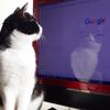 今日の黒猫モモ&白黒猫ナナの動画ー720