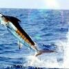 昨日のNHK  カジキマグロ 突きん棒漁