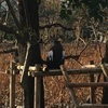 上野動物園 18回目