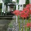 ジョギングで季節の花を詣でる ~明星輪寺のヒガンバナ~