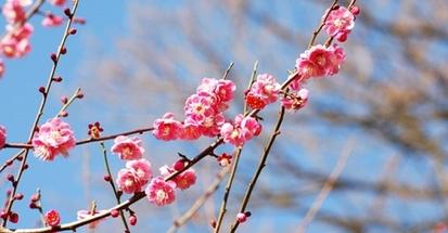 【雑学】自然観察指導員の徒然草=寒い冬でも花は楽しめる~後編