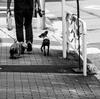 子犬の挨拶