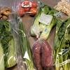 ふるさと納税返礼品 野菜定期便 第2便