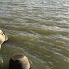 2019/10/13  釣行記  台風翌日の浜と河口