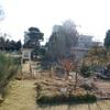 千葉大学、日本大学の先生方と植物園巡りをして来ました