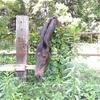 馬 【雑】【日記】