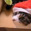 【完全に自己満足更新】我が家の猫を紹介してもいいですかー!