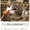 【ネコ放題】猫喫茶 空陸家