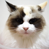 2月22日は猫の日!【うち猫写真集】
