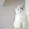 【猫好き必見】猫アレルギーとはどんな症状?起こる仕組みや原因を解説