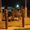 【沖縄こどもの国】夜の動物園を徘徊する
