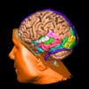 「ダライ・ラマ 宗教を越えて」その11。生まれながらの感情・行動パターンでも、脳から変えられる?
