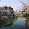 【千代田さくら祭り】満開の桜 牛ヶ淵~千鳥ヶ淵 朝の風景