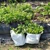 野菜は順調に生長 トマト キュウリ