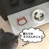 猫の顔が浮き出る小皿。の巻