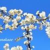 立つ春に梅づくし言葉綴り