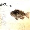 めじな(魚ばっかいサカナ図鑑)