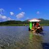 島丸ごと植物園!水牛車で渡る由布島で黄金のサナギを見た
