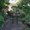 お庭は緑でいっぱいです🎵