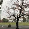 大阪市立大学合気道部の廃部について