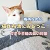 梅雨なのに猫が布団におしっこ!ズボラ主婦の臭い対策